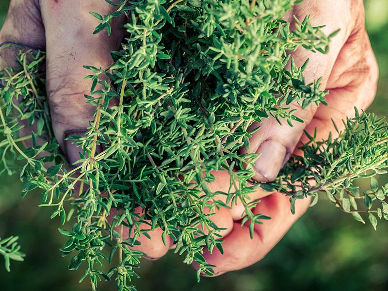 krauter-heilpflanzen
