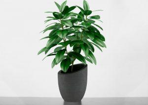 gwk-content-zimmerpflanze